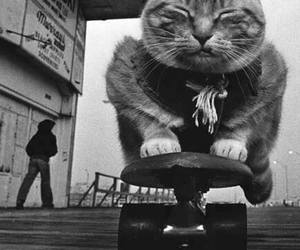 cat, skate, and animal image