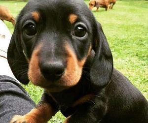 animals, puppies, and cute image