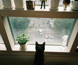 cat, window, and street image
