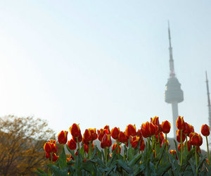 tower from namsan park image