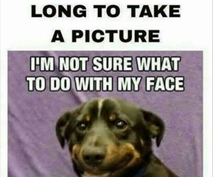 funny, dog, and picture image