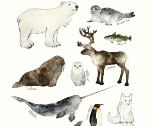 animal, penguin, and arctic image
