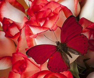 rose, butterfly, and red image