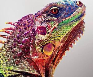 animal, reptile, and colorful image