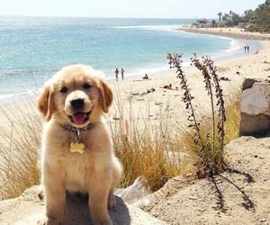 dog, cute, and beach image
