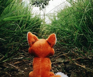 fox and nature image