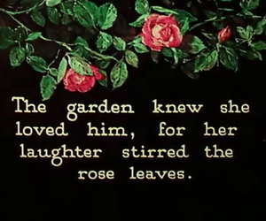 love, rose, and garden image