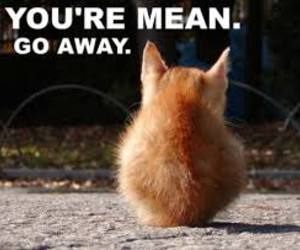 cat, mean, and go away image