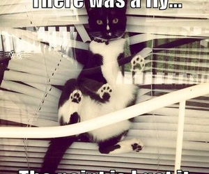 cat, funny, and fly image