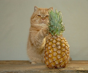 cat, photography, and pineapple image