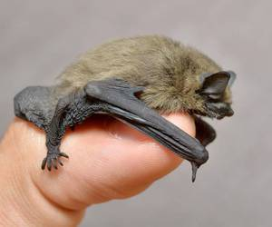 baby animals, bats, and cute animals image