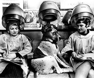 vintage retrò dog image
