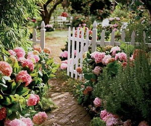 flowers, garden, and pink image