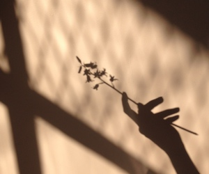 beige, flowers, and shadow image