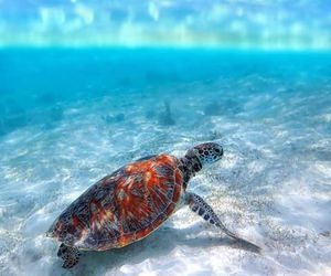 beach, turtle, and nature image