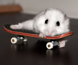 cute and mouse image