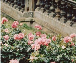 floral, flowers, and praktica image