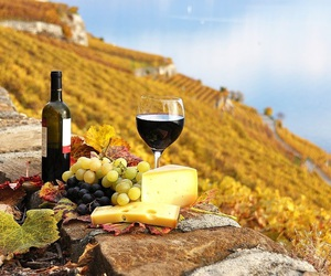 autumn, cheese, and wine image