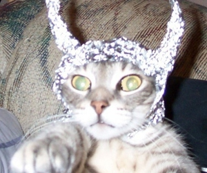 meow, tin foil, and funny cats image