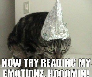 brain waves, cat, and funny image