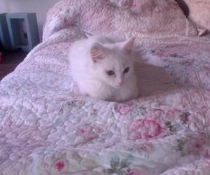 cat, pale, and cute image