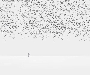 bird, lonely, and black and white image