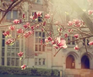 virágok, szépség, and táj image