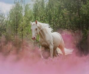 horse, розовый, and природа image