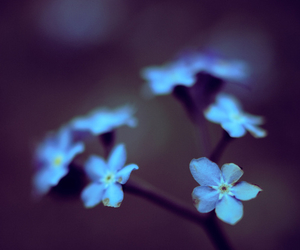 beutiful, blue, and flowers image