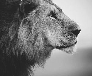animal, Animal kingdom, and black and white image