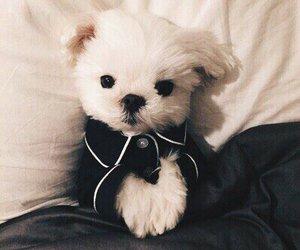 dog, puppy, and animal image