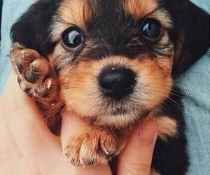 dog, cute, and 💋 image