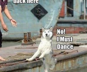 funny, dog, and dance image