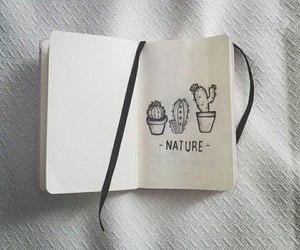 nature, cactus, and grunge image