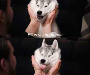 Animales, frases, and perros image