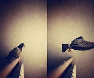bird, fly, and go image