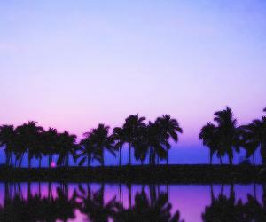 header and purple image
