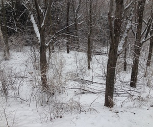 cold, outdoor, and trees image