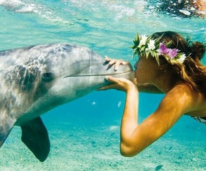 dolphin, flower crown, and sea image