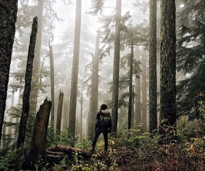 adventure, forest, and mountain image