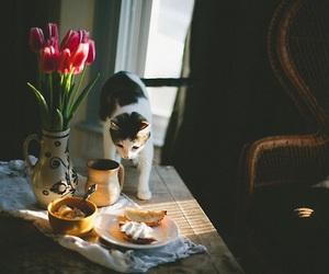 Image by Mina