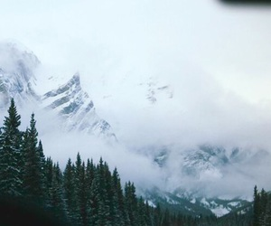 forest, mountains, and landscape image