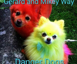 dogs, edit, and funny image