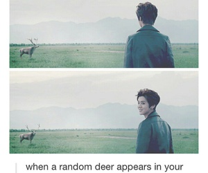 animals, funny, and luhan image