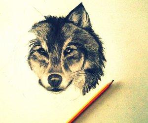 drawing, wolf, and animal image