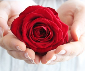 flowers, hands, and romantic image