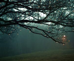 light, tree, and nature image