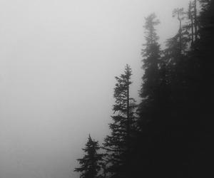 tumblr, туман, and landscape image