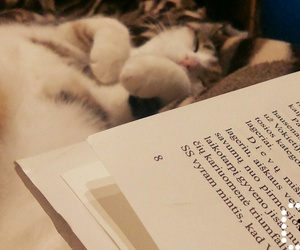 cat, evening, and reading image