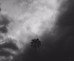 black and palm tree image